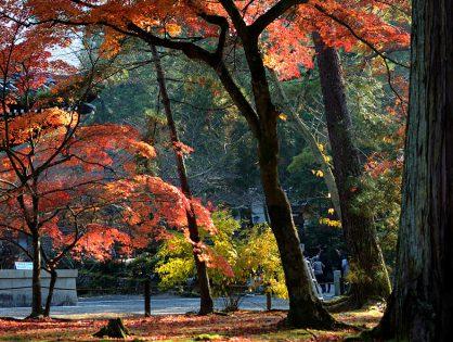 そうだ、京都寄ってみよう