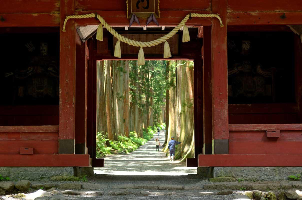戸隠神社の奥社参道並木